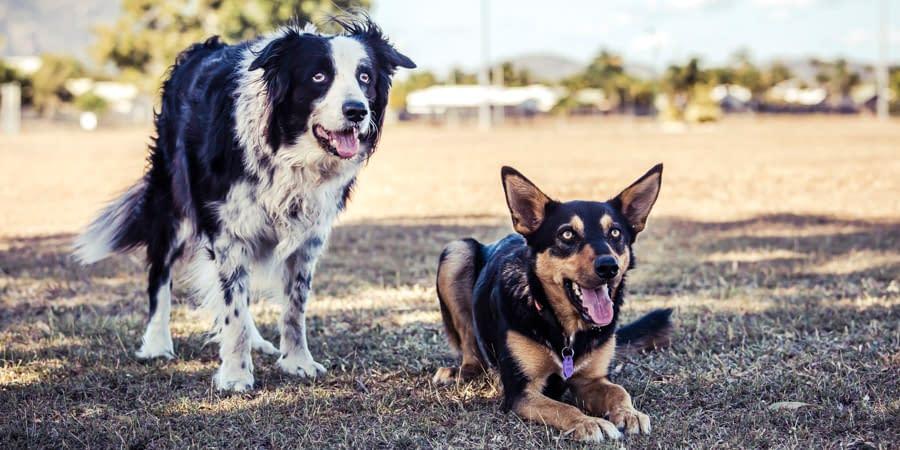Dog Lifestyle Session